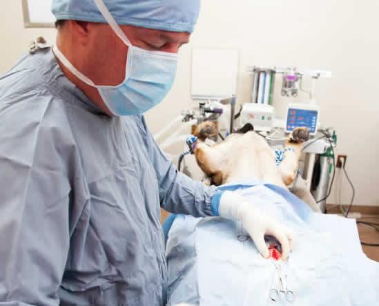vet operating