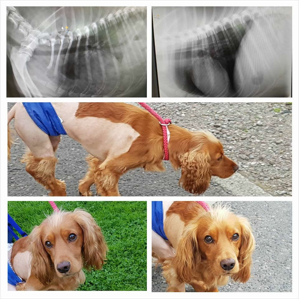 Patient Buddy who had surgery done by Andrew Miller referrals Scotland
